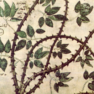 manuscript with thorns,The First Secret of Overcoming Writer's Block